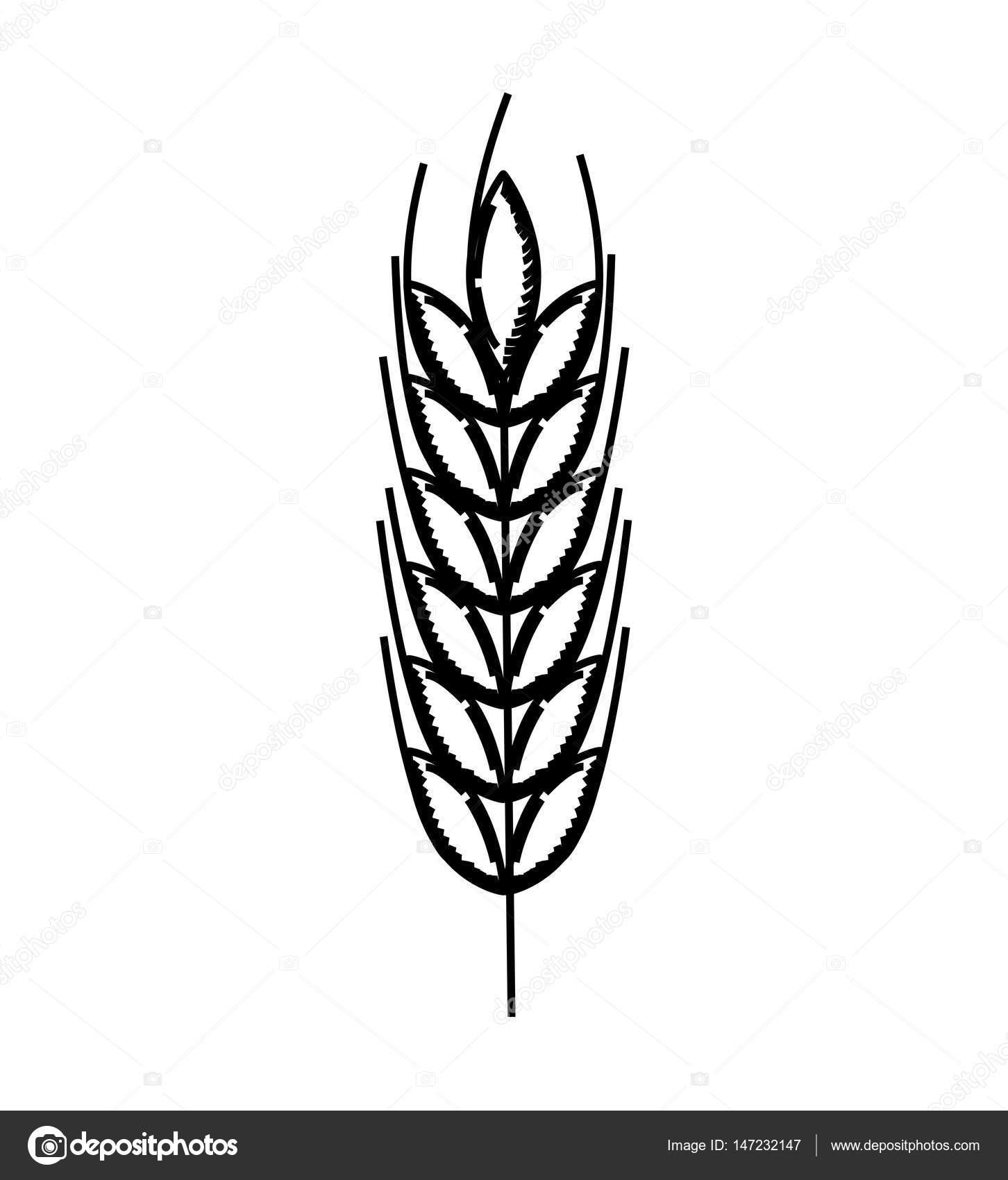 icono aislado de la espiga de trigo — Archivo Imágenes Vectoriales ...