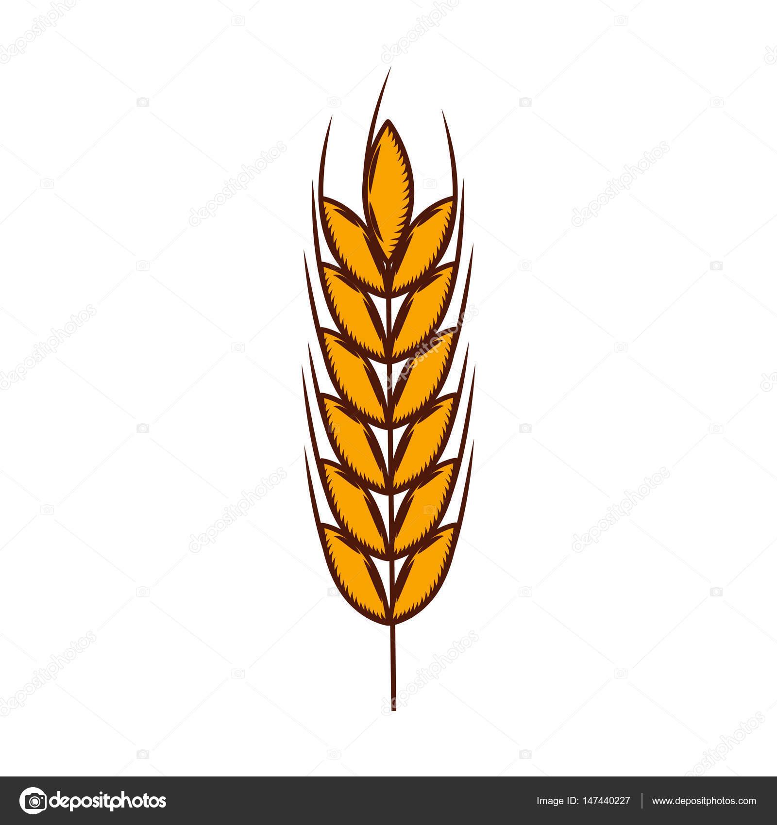 Icono espiga trigo | icono aislado de la espiga de trigo — Vector de ...