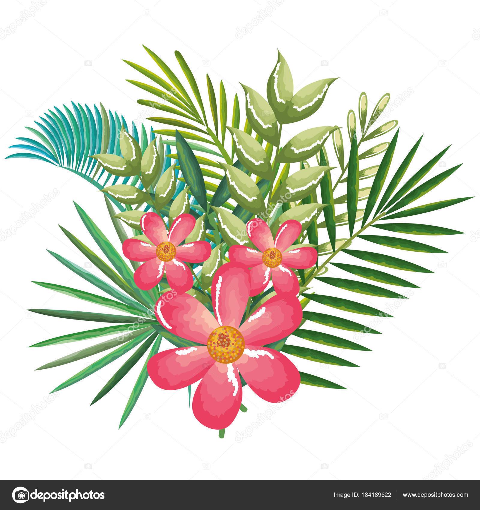 Tropicais E Exóticas Flores E Folhas