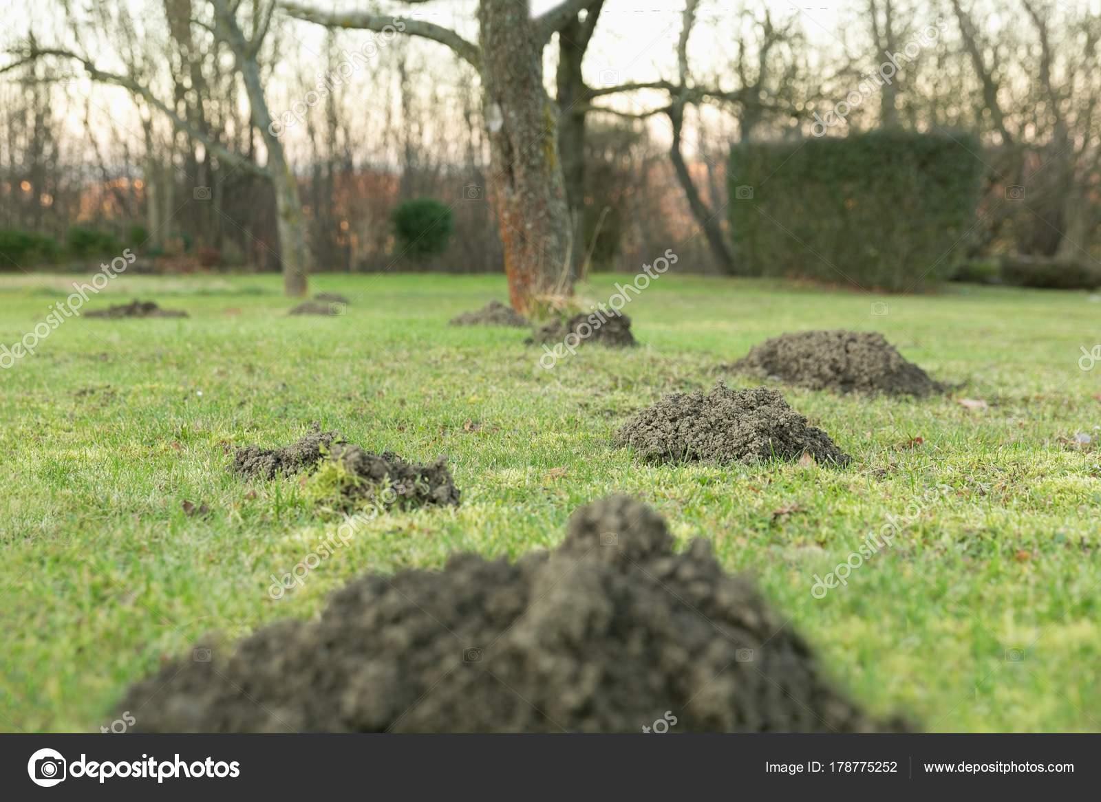 Foro di talpa in giardino u foto stock pitrs