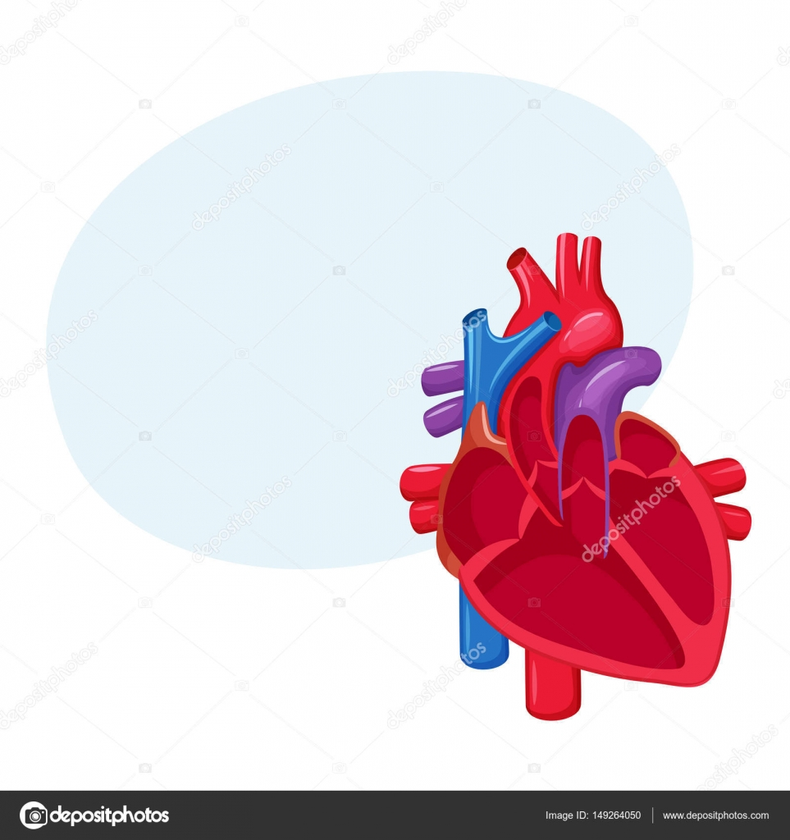Anatomía del corazón humano — Vector de stock © nordfox #149264050
