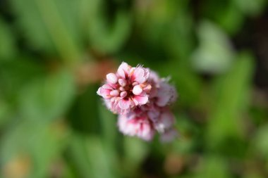 Fleece flower
