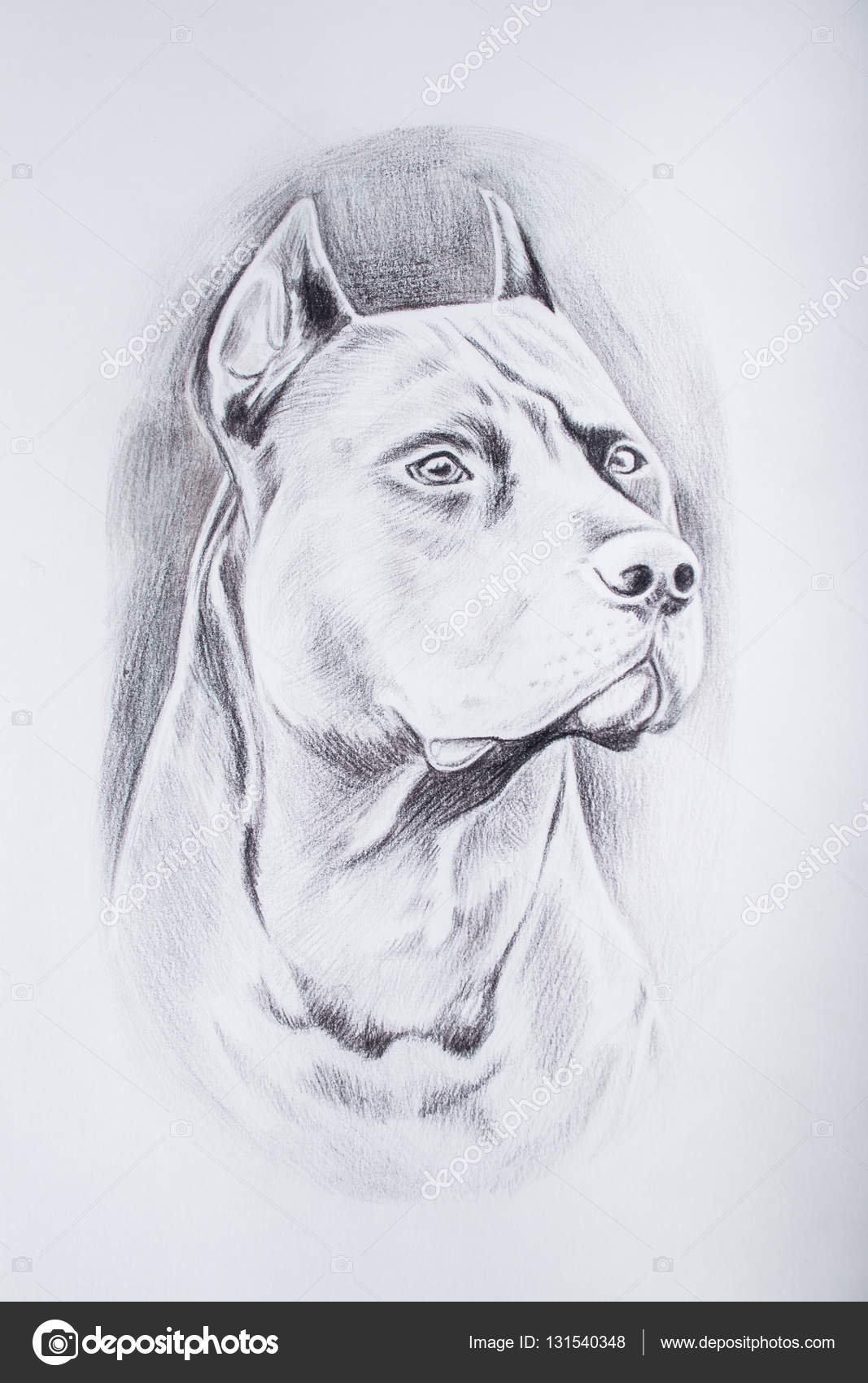 Imágenes Dibujo A Lapiz Dibujo A Lápiz Del Perro Sobre Fondo
