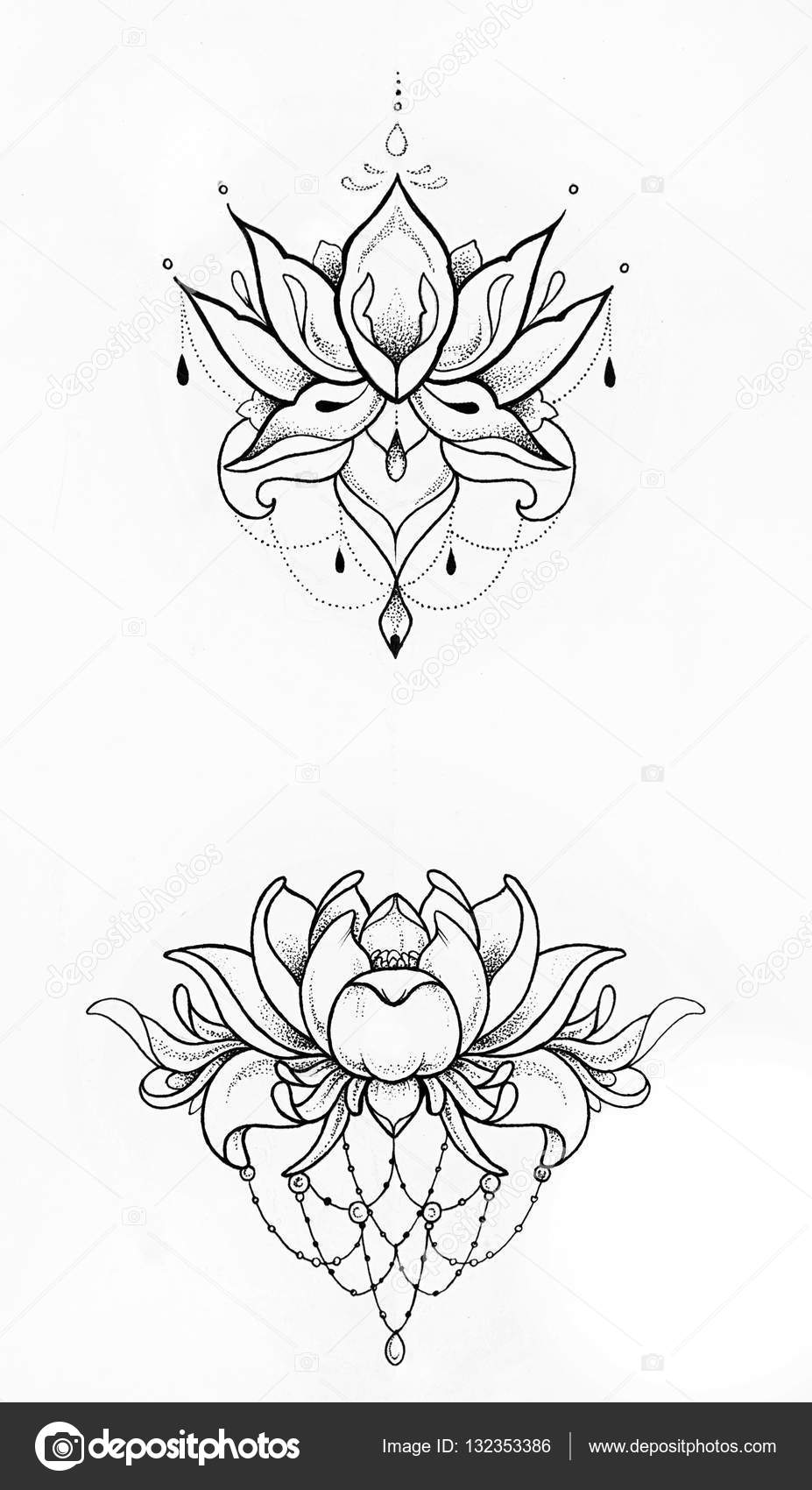 Imágenes Loto Dibujo Dibujo De Una Flor De Loto Sobre Fondo