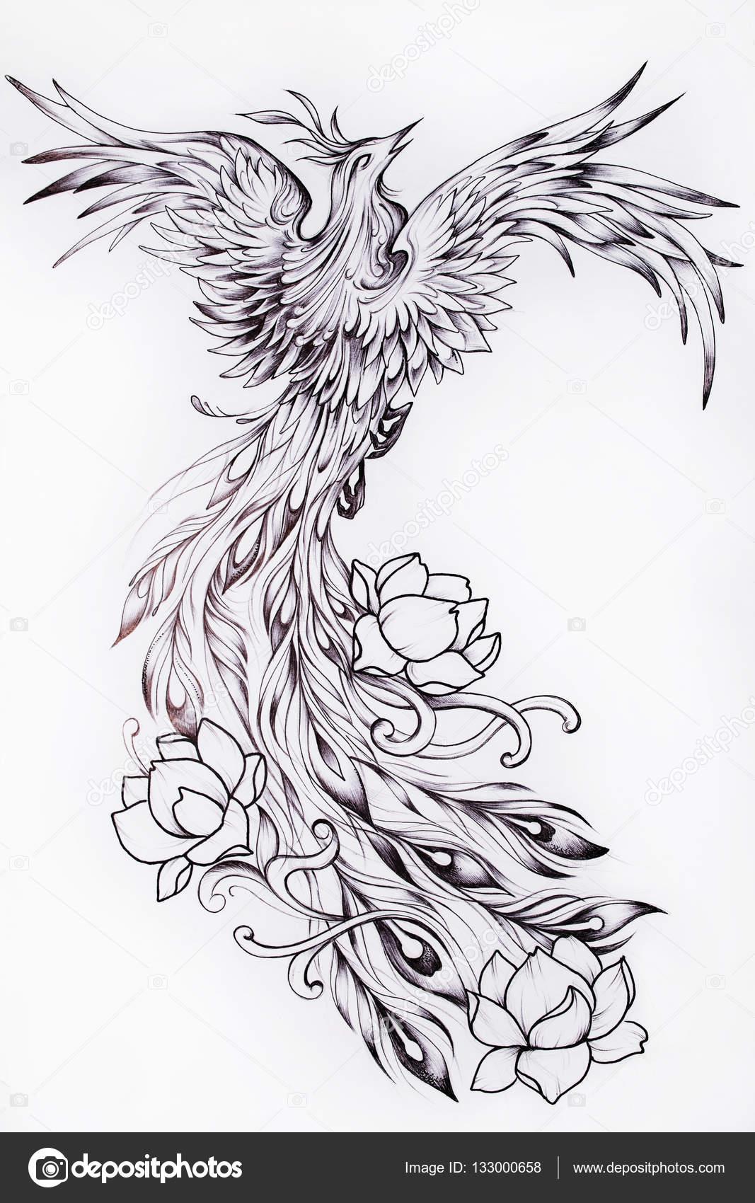 Dibujos: dibujo ave fenix | Boceto blanco y negro de un ave fénix ...