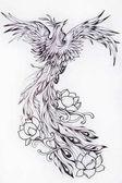 Fényképek Fekete-fehér vázlatot egy gyönyörű virágok Phoenix.