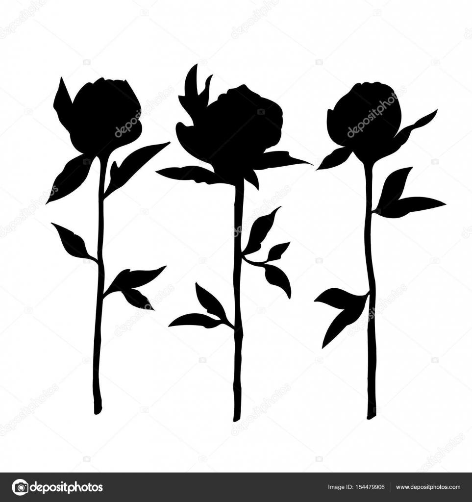 Uno Schizzo Di Rose Nere Su Sfondo Bianco Vettoriali Stock