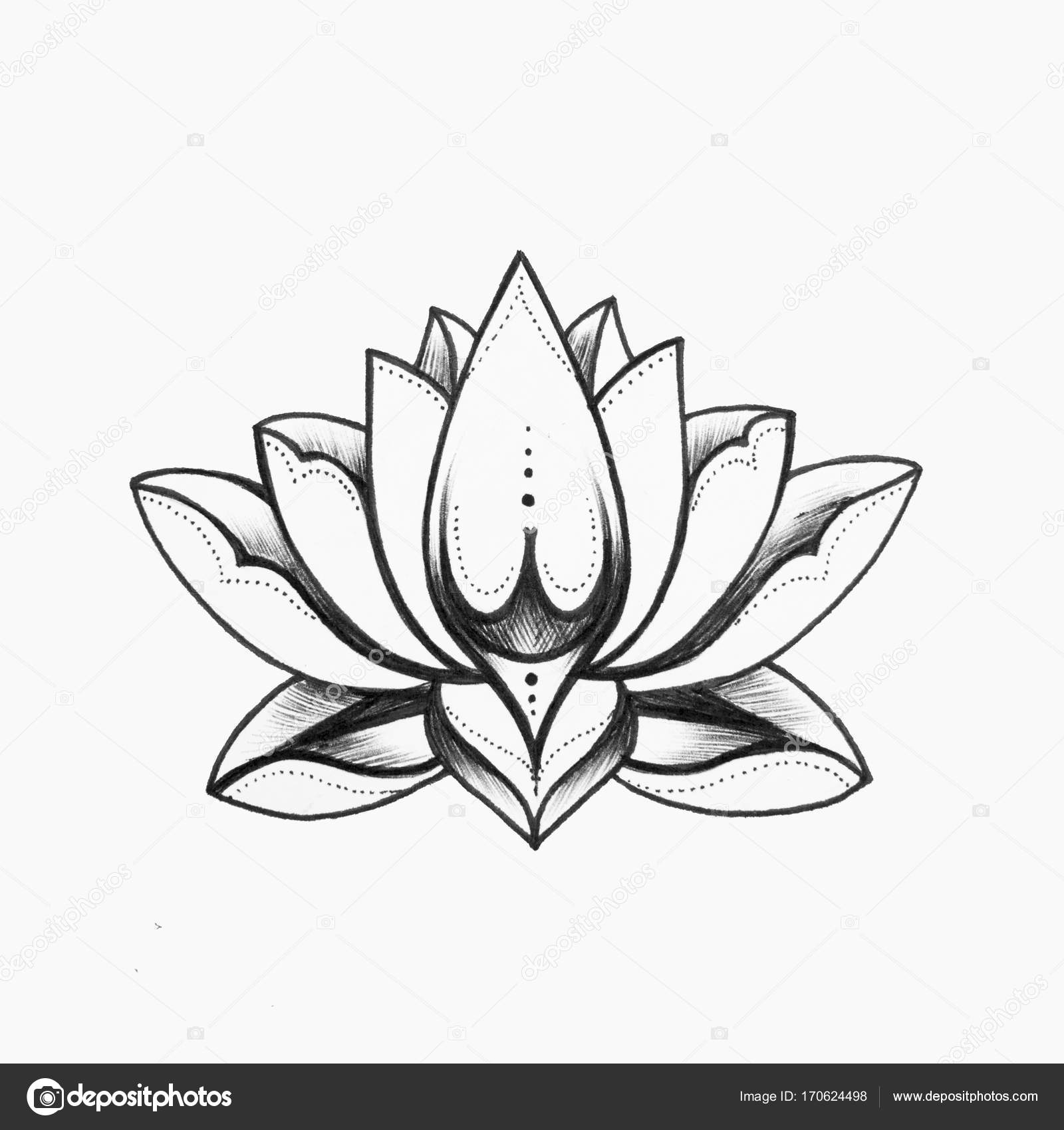 A Sketch Of A Beautiful Black And White Lotus Flower On A White