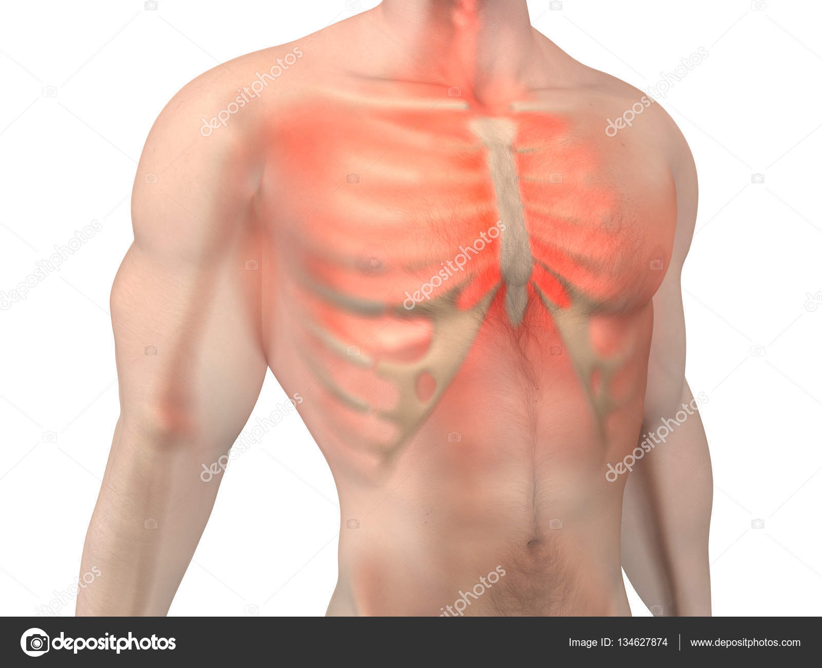 Male Anatomy Chest Pain Stock Photo Spectral 134627874