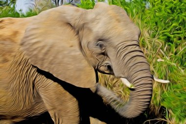 African elephant in the Kruger National Park and one of the largest game reserves in South Africa.