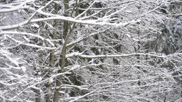Schnee bedeckte Bäume im Winterwald