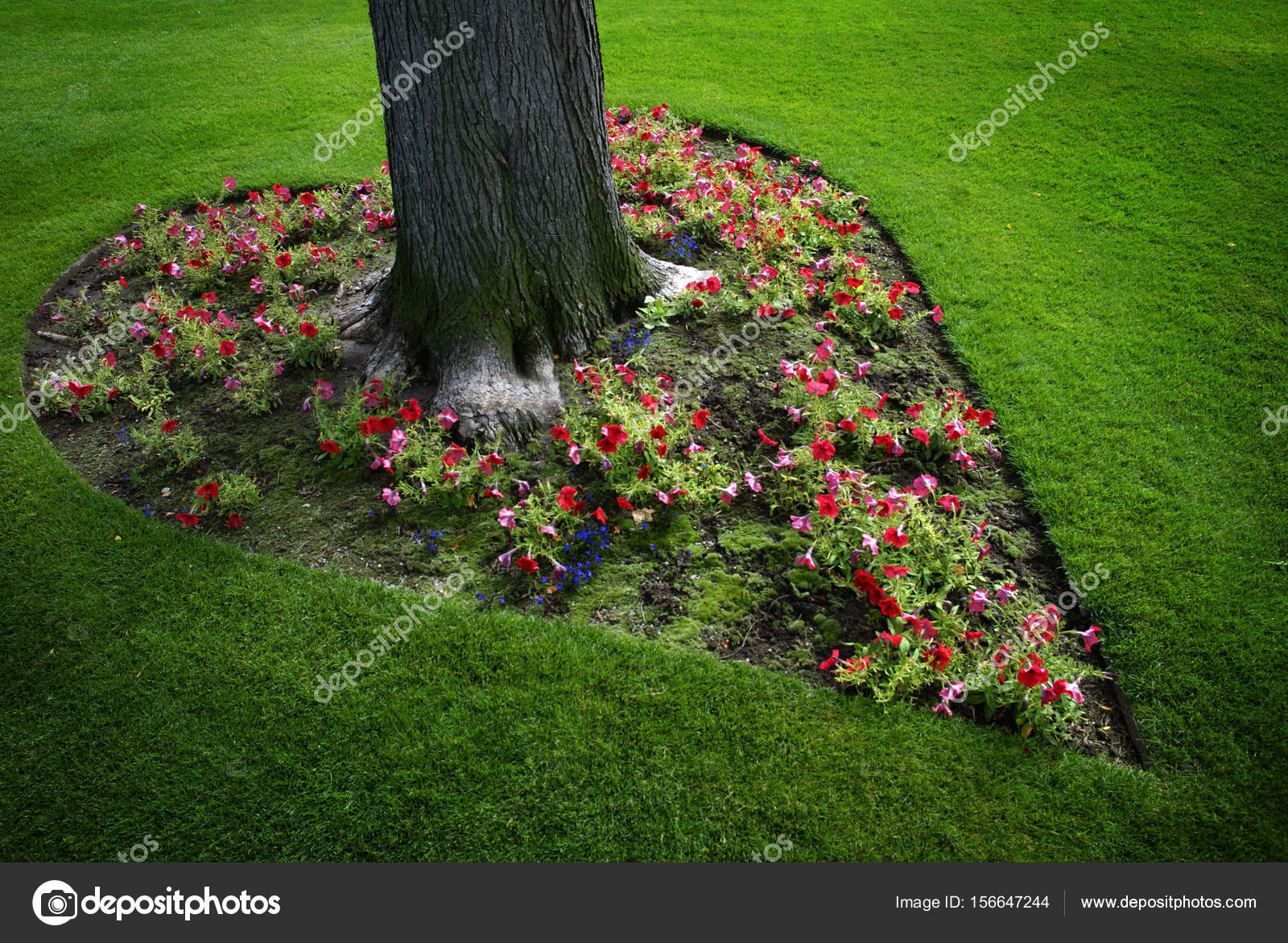 Pictures Heart Shaped Garden Heart Shaped Flower Garden Around Tree Stock Photo C Eric1513 156647244