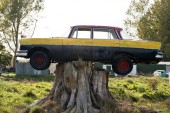 Fotografie Old Car Trapped and Balancing on Tree Stump