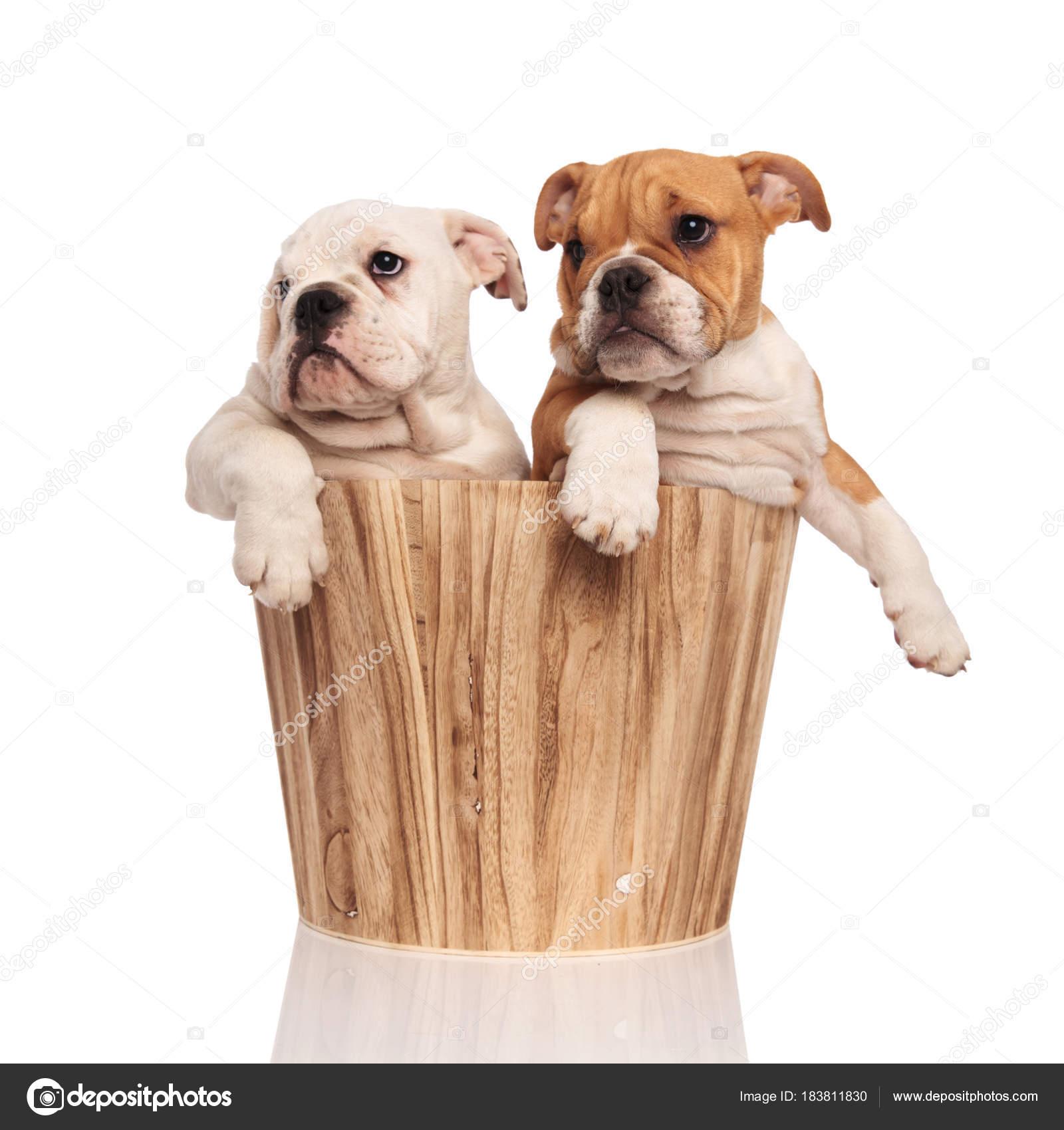 Due Cuccioli Allinterno Del Secchio Con Gambe Appese Guarda Al