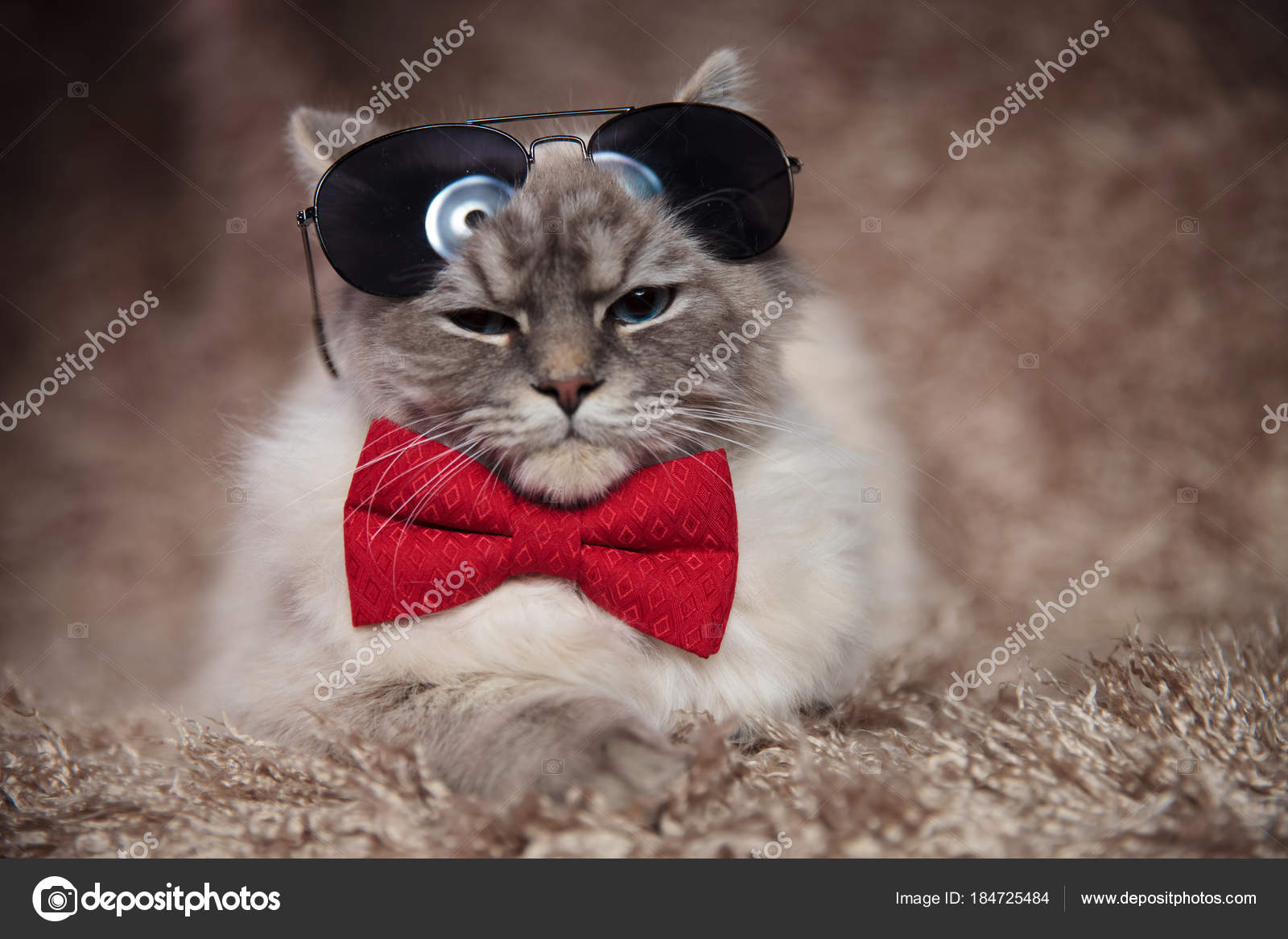 d4749b128f Cool modern cat wearing bowtie and sunglasses is lying down on furry  background — Photo by feedough