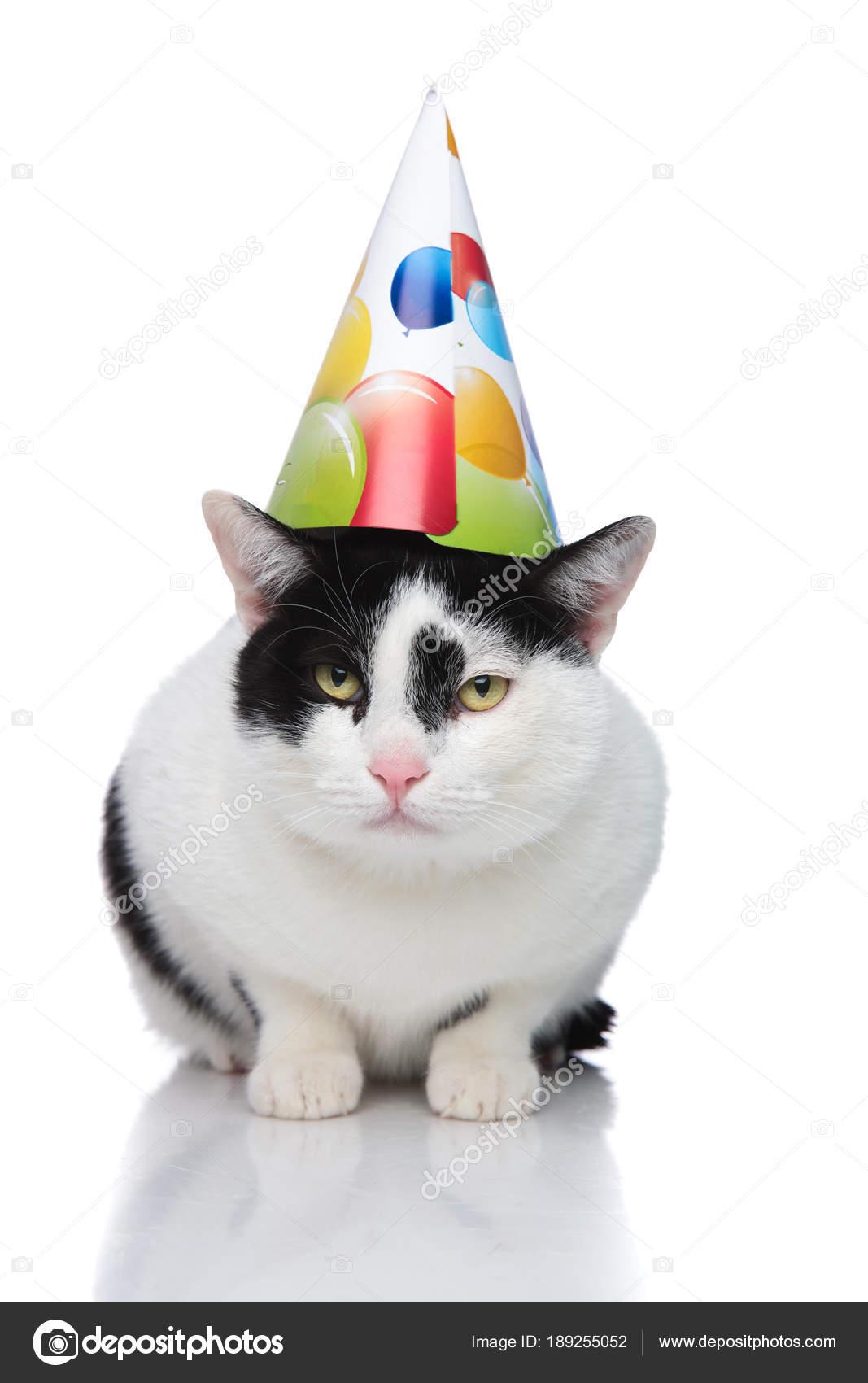 Mooie Verjaardag Kat Dragen Kleurrijke Ballonnen Glb Stockfoto