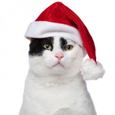 close up of an adorable cat wearing a santa cap