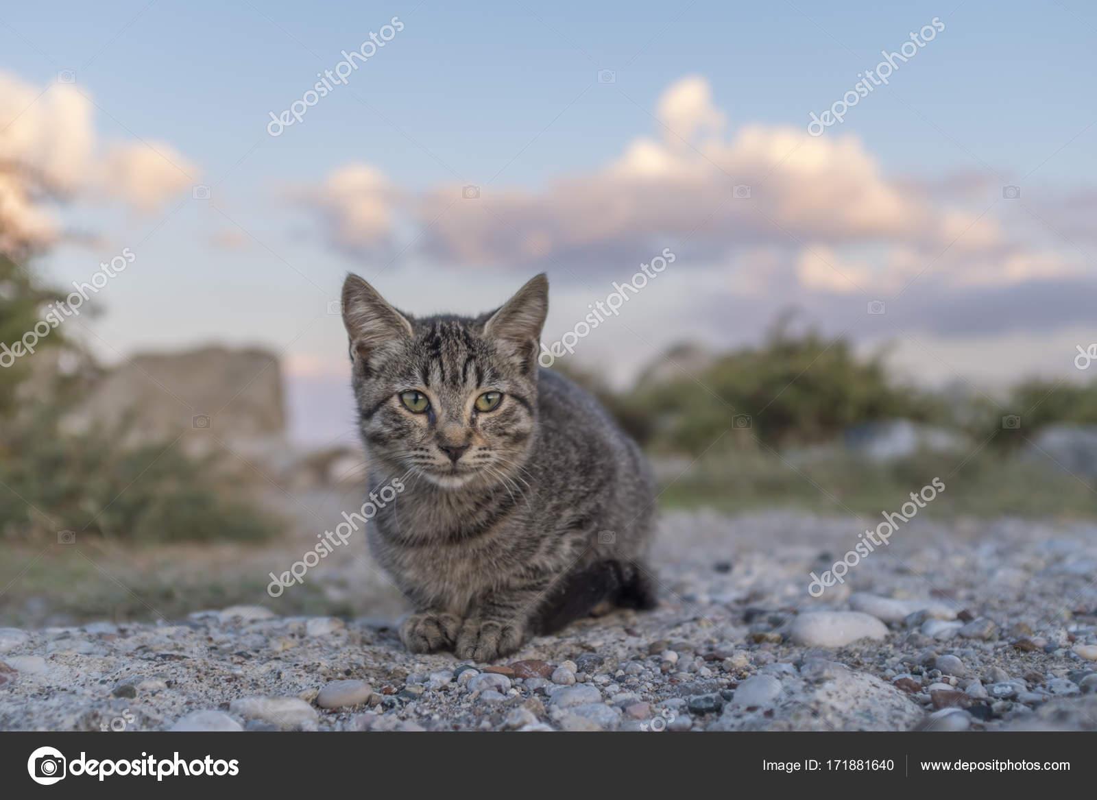 7c4fd225ff54 Παρόμοιες royalty-free εικόνες  Άστεγο γάτα στην προκυμαία granit στην  Κωνσταντινούπολη Φωτογραφία Αρχείου