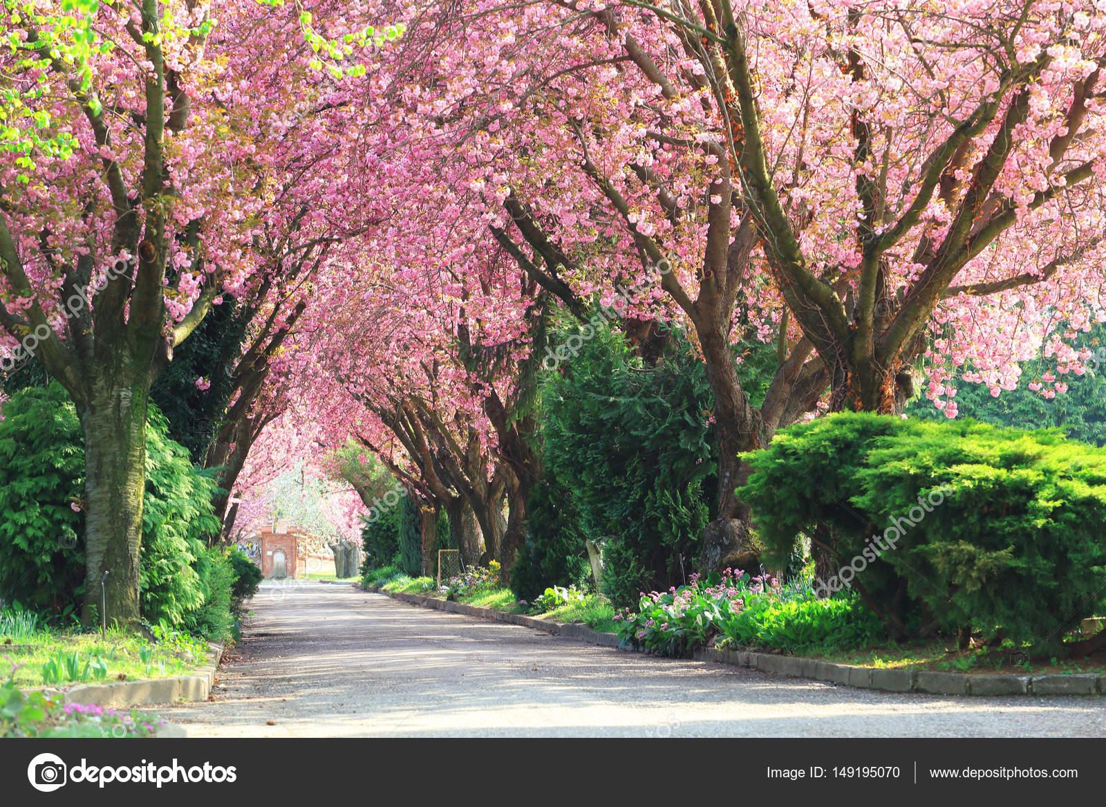 Blooming Trees In Spring Stock Photo Joruba75 149195070