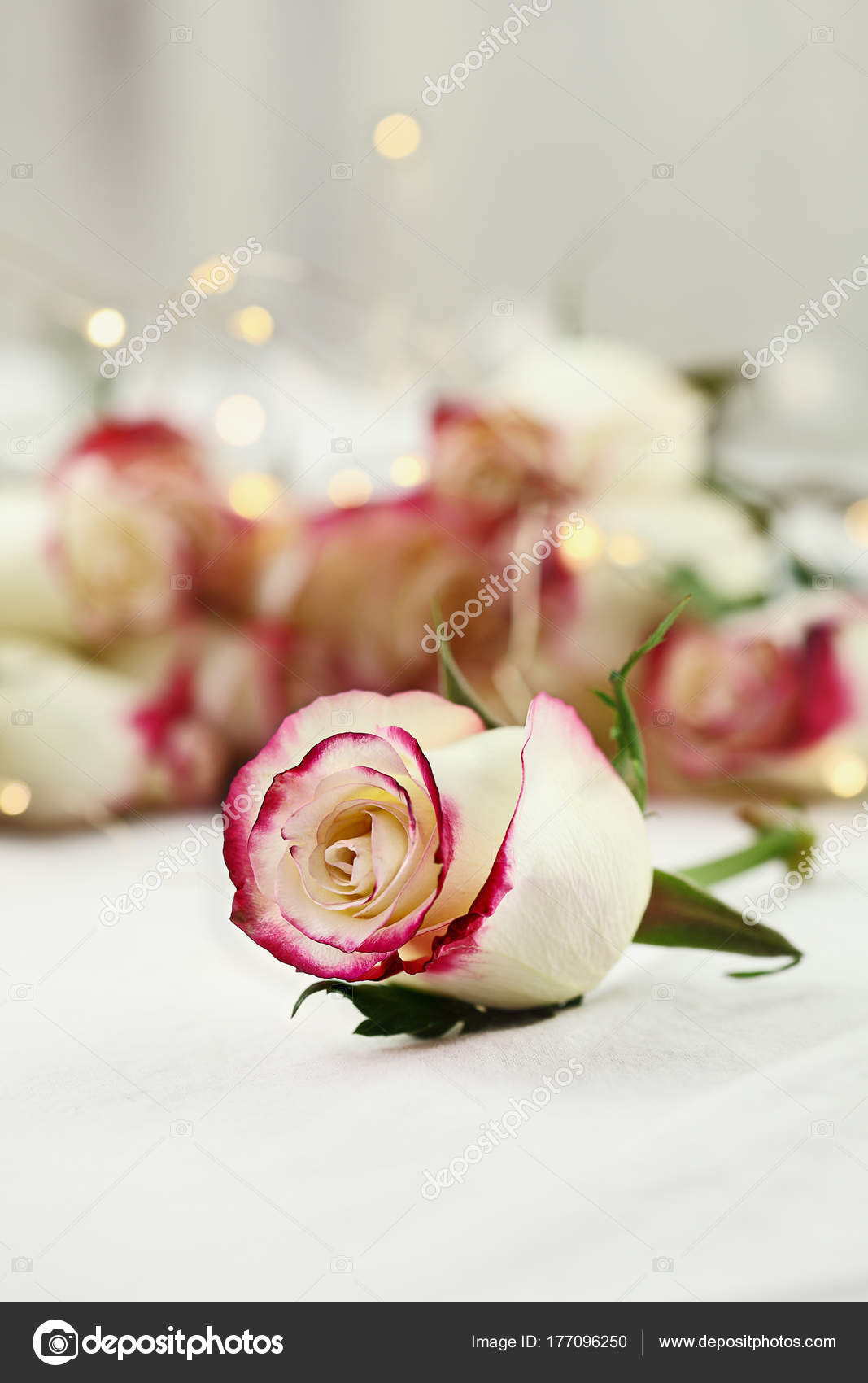 White And Red Roses With Fairy Lights Stock Photo Stephaniefrey