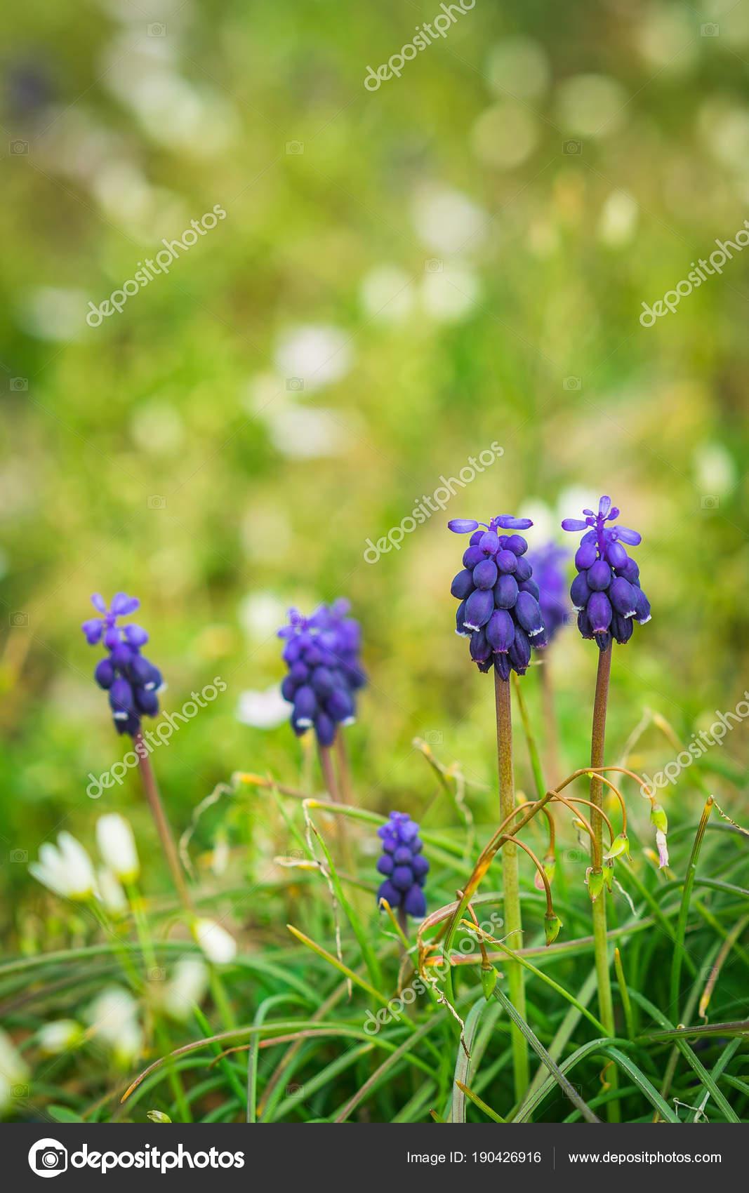 Purple Flowers In Grass Stock Photo Keeweeboy 190426916