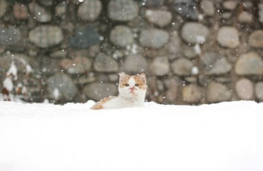 Beautiful little ginger cat sitting in the snow on a snowy day.