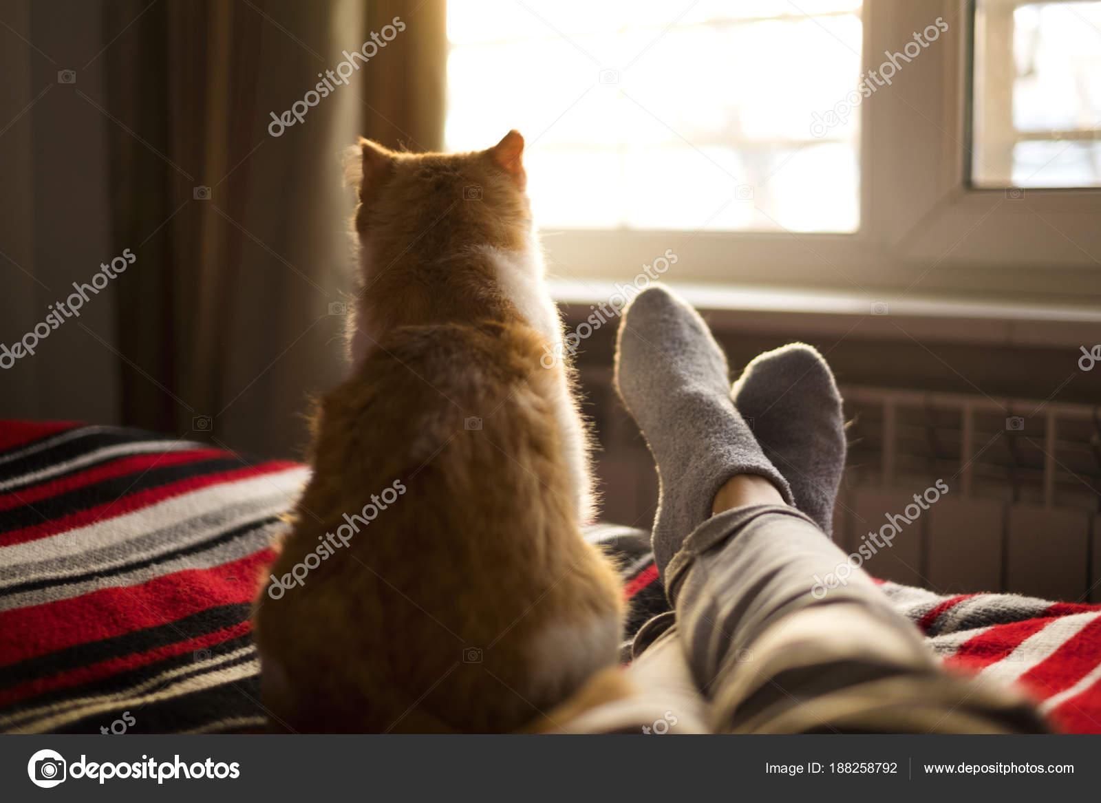 f7c2fe49d3f6 Ψέματα και ξεκούραση στο κρεβάτι με την γάτα απέναντι από το παράθυρο σε  μια ηλιόλουστη ημέρα