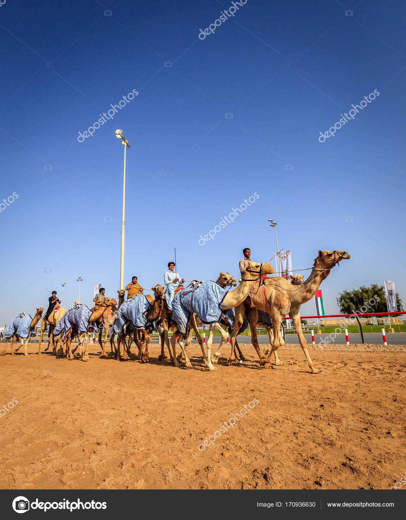 Camel racing in dubai stock editorial photo alexeys 170936630 dubai united arab emirates march 25 2016 practicing for camel racing at dubai camel racing club al marmoom uae photo by alexeys thecheapjerseys Image collections