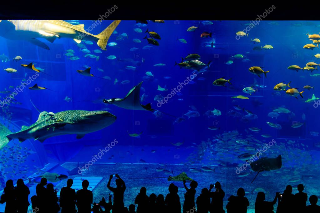 Sea life park in Okinawa