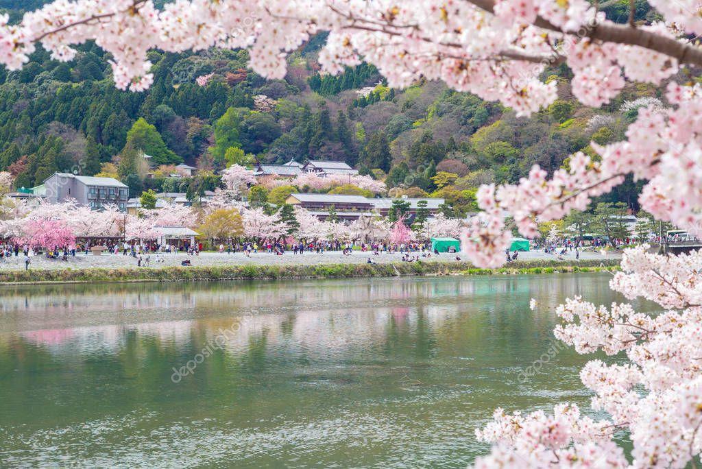 Scene of the riverside with cherry blossom at Arashiyama