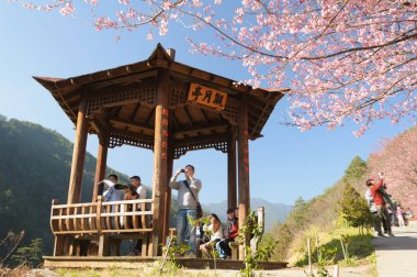 Wuling farm with cherry blossom in Taichung