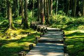 dřevěný chodník v lese