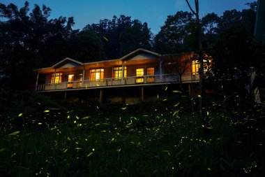 fireflies in the country side of Chiayi at night