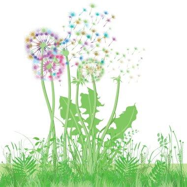 Dandelion in the meadow illustration