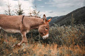 Photo donkey grassing in mountain