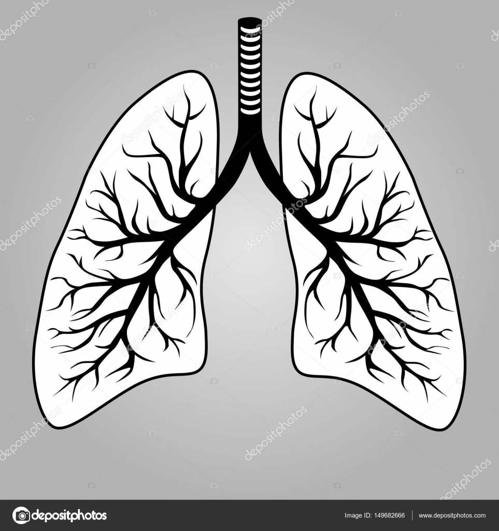 menschliche Lunge Orgel — Stockvektor © leonardo255 #149682666