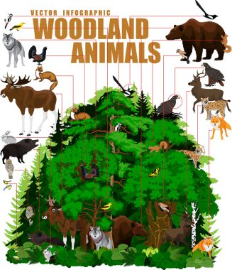 vector infographic north woodland forest with animals