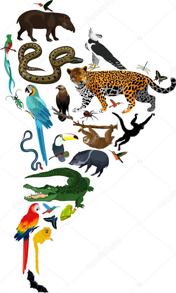 animals South America - vector illustration