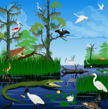 vector wetland Pantanal Everglades landscape with animals