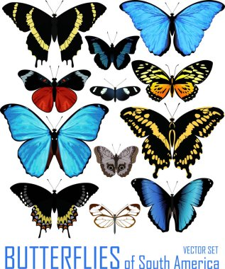 vector set of butterflies of south America