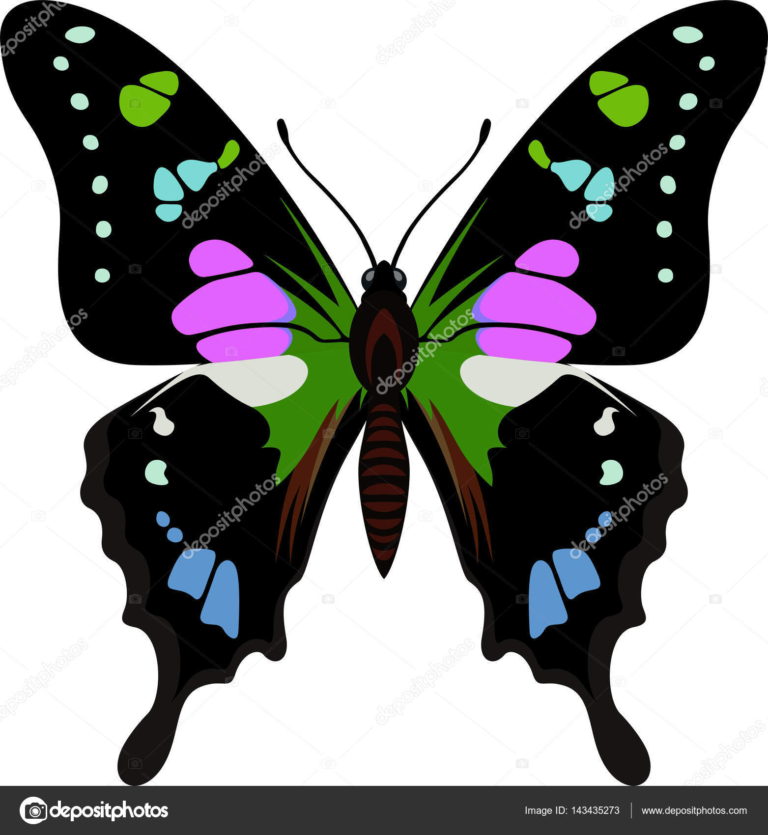 vector purple spotted swallowtail butterfly from new guinea