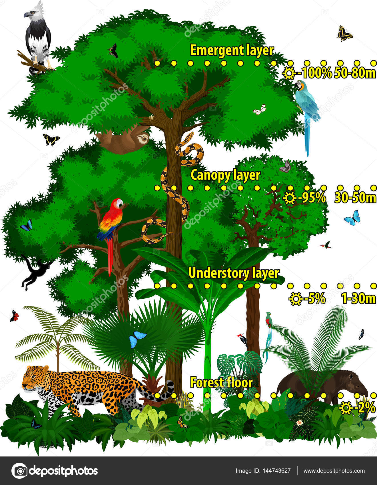 Rainforest jungle layers vector illustration. Vector Green Tropical Forest jungle with different animals. u2014  sc 1 st  Depositphotos & Rainforest jungle layers vector illustration. Vector Green ...