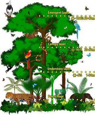 Rainforest jungle layers vector illustration. Vector Green Tropical Forest jungle with different animals. stock vector