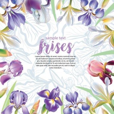 Greeting card with iris flowers