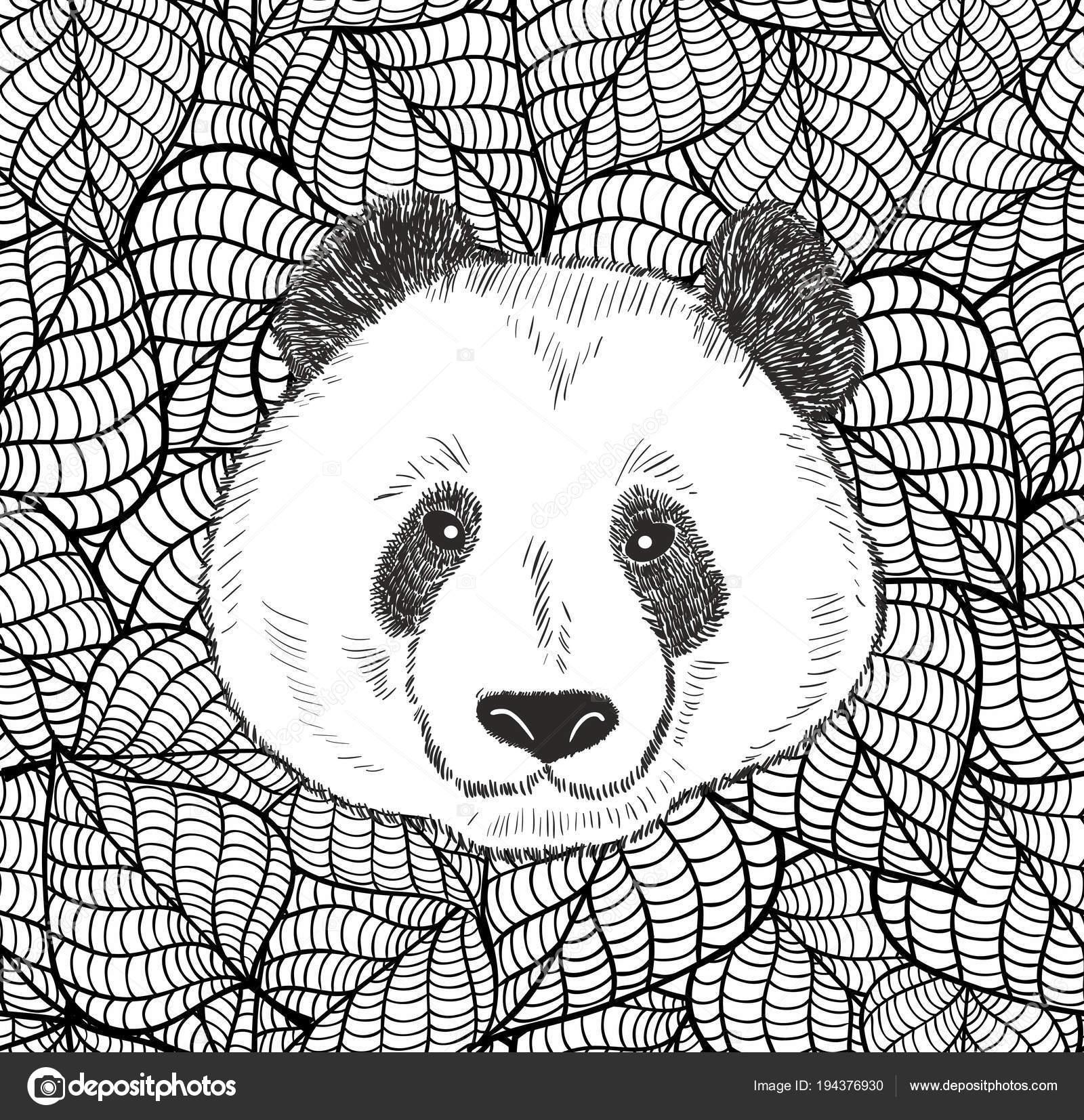 Cabeza De Oso Panda Para Colorear Linda Cabeza Chino Oso Panda
