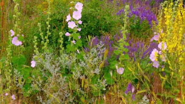 Divoká růže kvetoucí a byliny