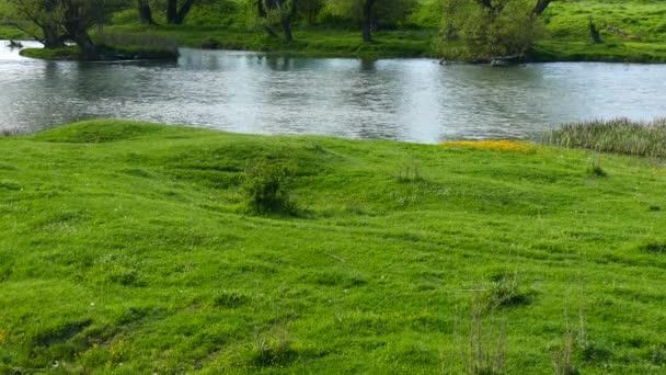 Jarní uprostřed přírody. Riverside. Kvetoucí divoké žluté květy