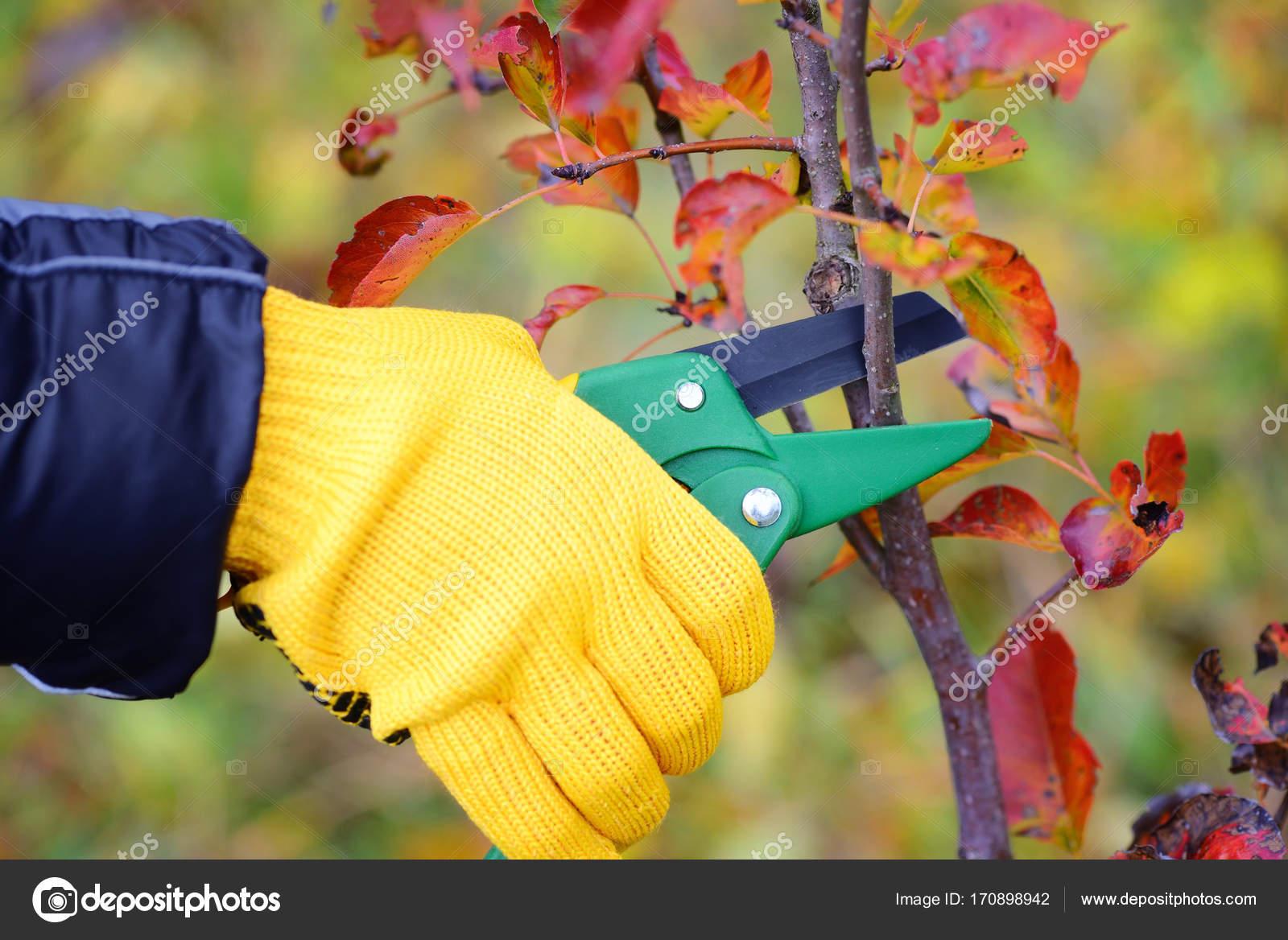 Hande Mit Handschuhen Von Wartungsarbeiten Gartner Arbeiten
