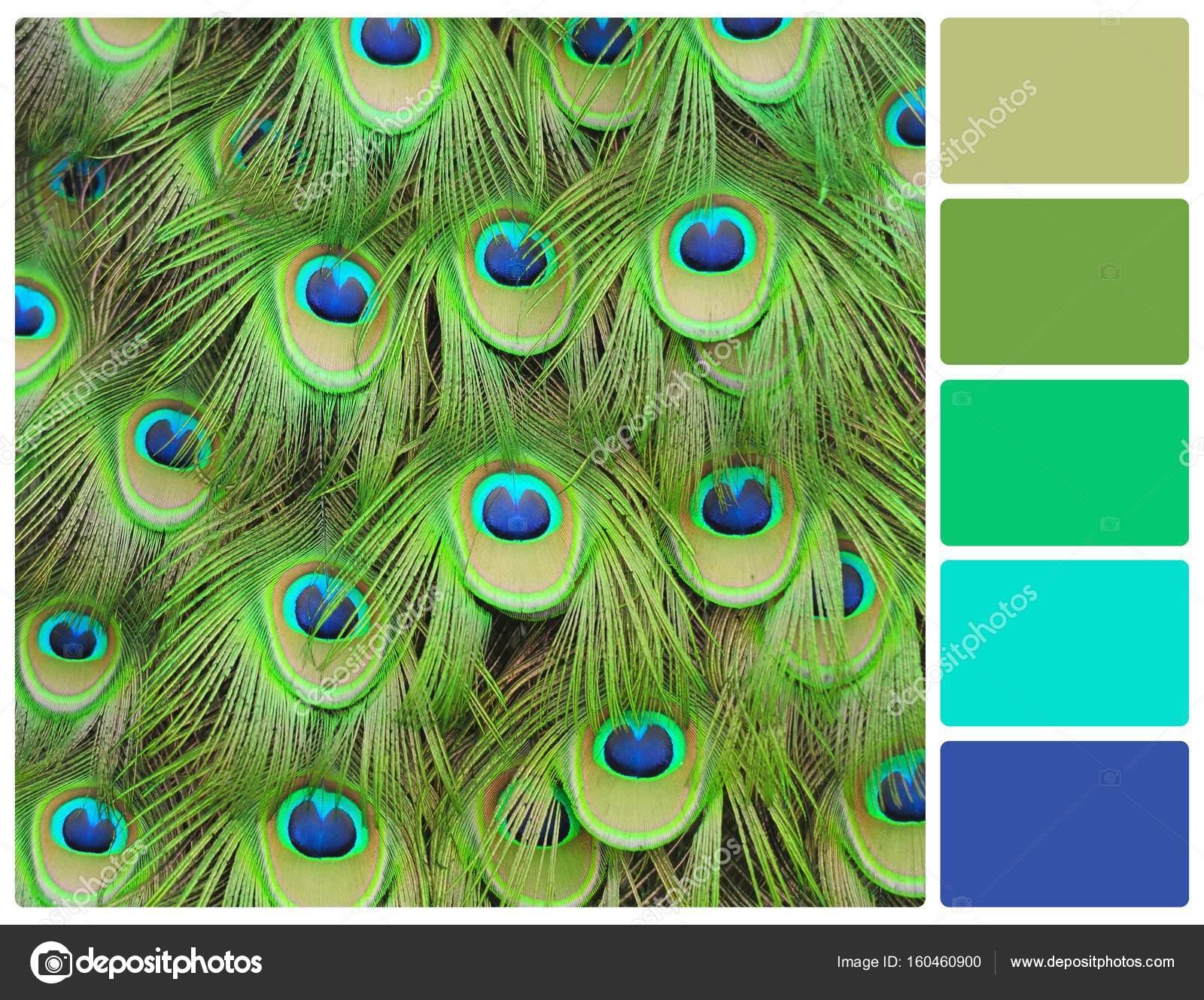 Tavus Kuşu Tüyü Palet Renk örnekleri Ile Stok Foto Volodymyrbur