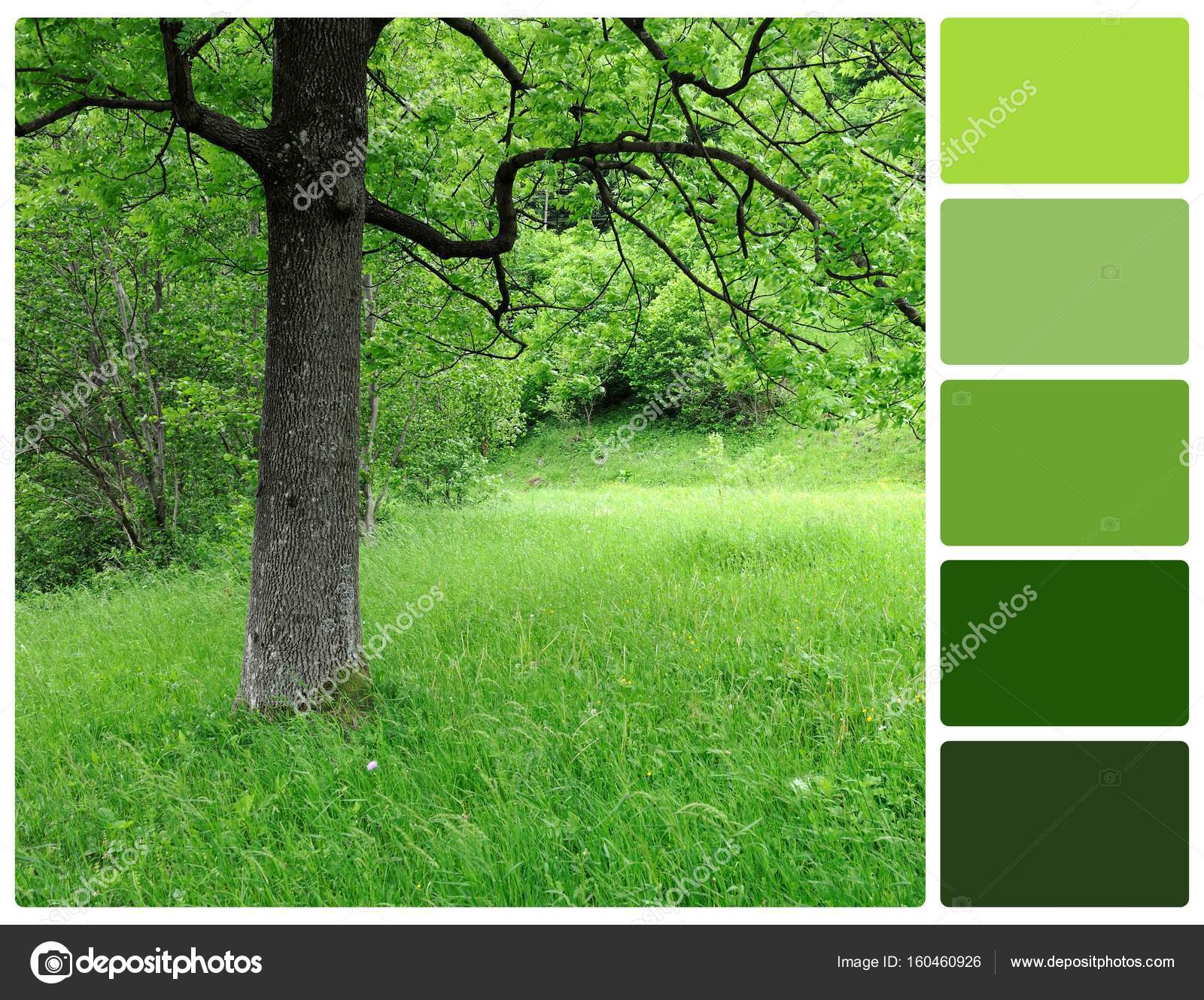 Spring tree with palette color swatches — Stock Photo © VolodymyrBur ...